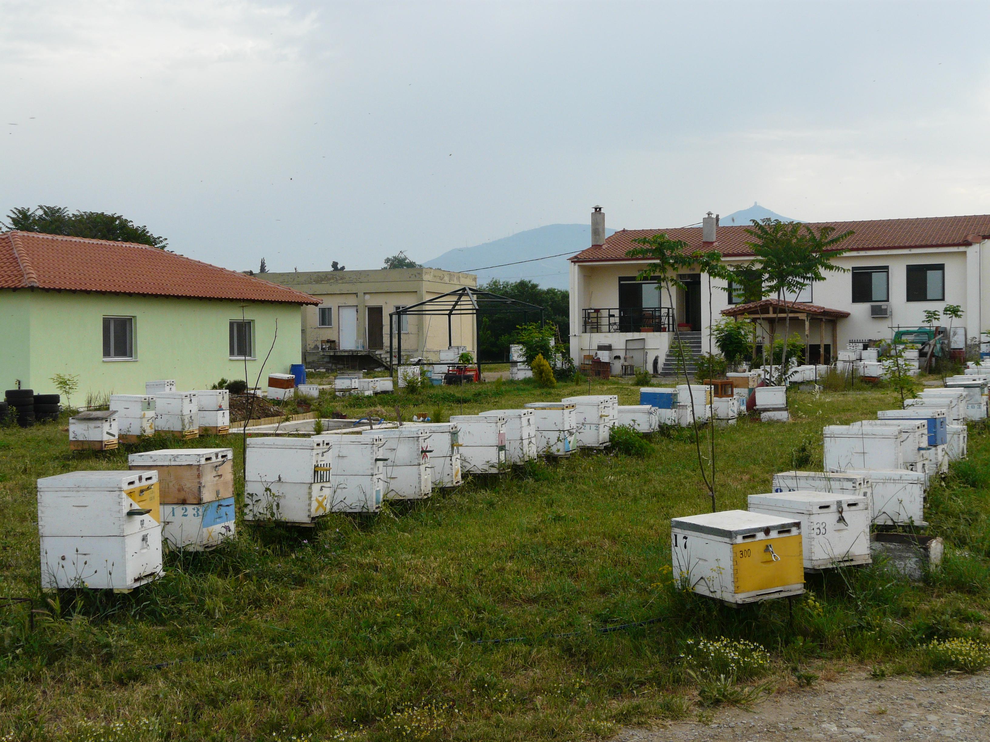 Εργαστήριο Μελισσοκομίας 3